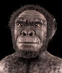 Homo_habilis_-_forensic_facial_reconstruction
