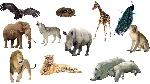 động vật