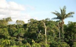 South_American_jungle_photograph
