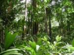 Flora ambiente equatoriale