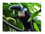 ambiente-equatoriale-6-638