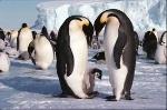 Fauna fascia polare