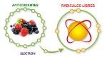 Radiales libres vs antioxidantes