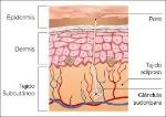 piel colágeno