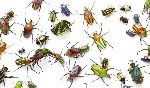 insects-681636