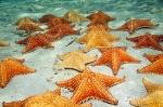 denizyıldızı