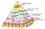 piramid nombor