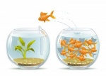 conversion-fish-bowl-300x214