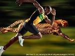 Cheetah vs Usain