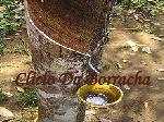 ciclo-da-borracha-1-728