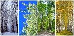 depositphotos_39181595-stock-photo-four-seasons-collage-winter-spring