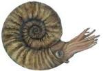 nautiloid