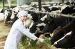 producteurs laitiers