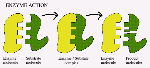 enzymeAction