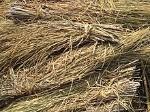 220px-Rice_straw