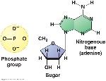 nucleotide 2
