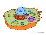 animal-cell-1
