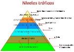 niveles-trficos-1-638 (1)