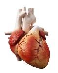 cual-es-la-funcion-del-corazon-humano1-e1442401585583