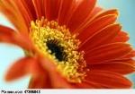 fleur7