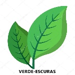 depositphotos_94990104-stock-illustration-two-green-leaves-cartoon-icon