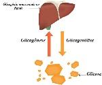 glicogenio