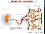 desarrollo-y-funciones-de-la-placenta-dr-igor-pardo-zapata-2017-19-638