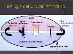 liquido-amniotico-5-638
