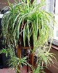 plantas-que-podem-sobreviver-ao-canto-mais-escuro-1