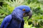 5346a9b5ea44a-animais-em-extincao-no-brasil-medium