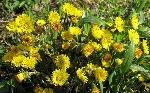 kartinki24_ru_wildflowers_09