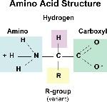 aminoAcidStruc