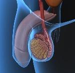 enfermedades-testiculos