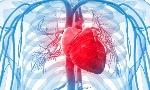 Curiosidades-sobre-el-corazon-humano-2