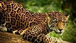 Tour-Científico-de-Jaguar-en-México-CANCUN-TOUR-5