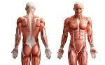 los-4-organos-mas-misteriosos-del-cuerpo-humano_reference