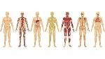 De-la-cabeza-a-los-pies-el-cuerpo-humano-en-cifras-01