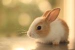 bunny_wallpaper_by_aoao2-d52l2eb