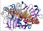 Enzyme-optimization-graphic-copyNEW2