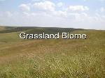 grassland-1-728