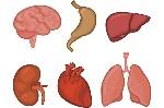 El-futuro-de-la-impresion-3D-organos-humanos-2