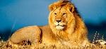 leones-800x375