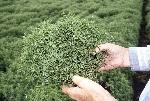 lentils-1000-hands-holding-RGB