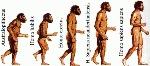 Prehistoria HOMINIZACION_small