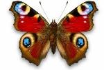 бабочкаъ