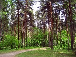 sosnovka_b
