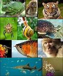 животните