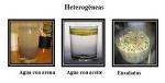 heterogeneas