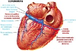 arteria-coronaria-2