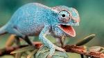 todo-los-que-debes-saber-sobre-los-reptiles-1-620x349